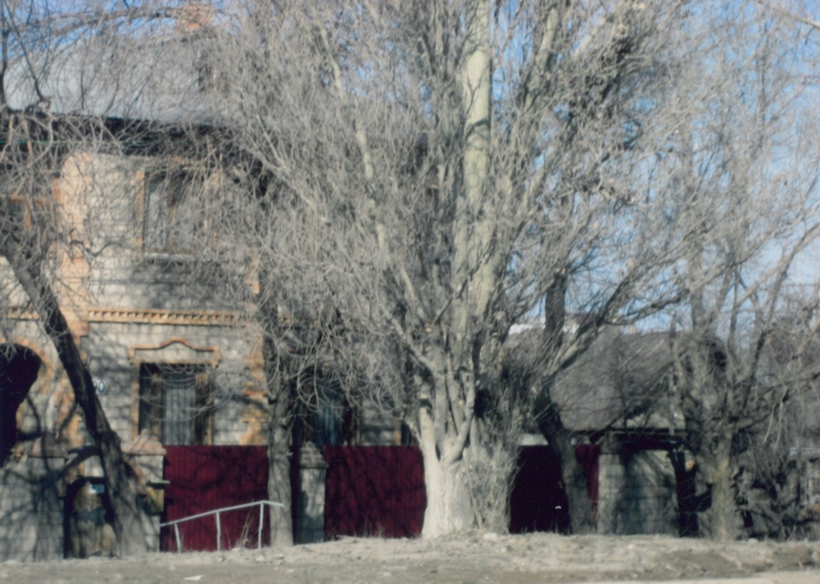 Medis prie namo.