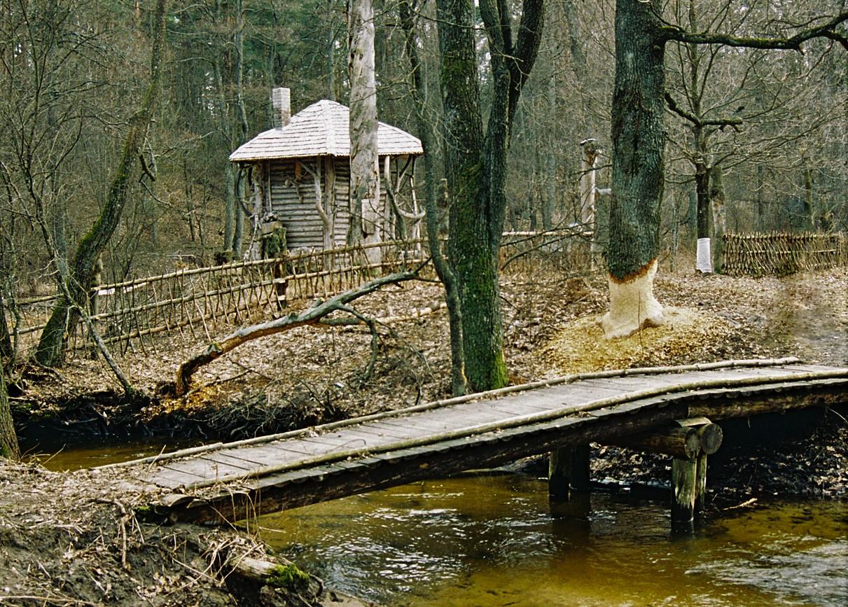 Miško vaizdas.