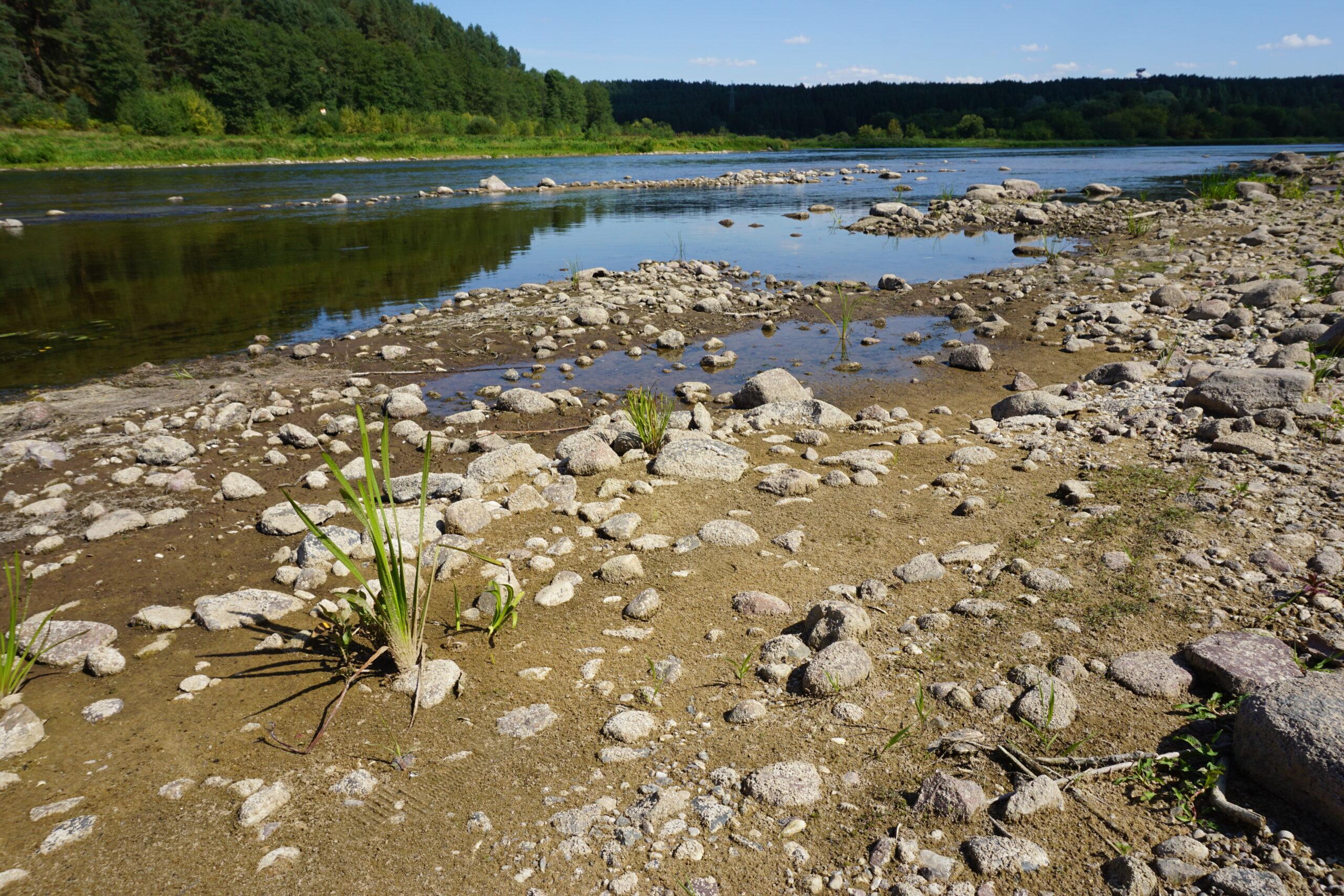 Nusekęs vanduo Nemune, matosi dugno akmenys.