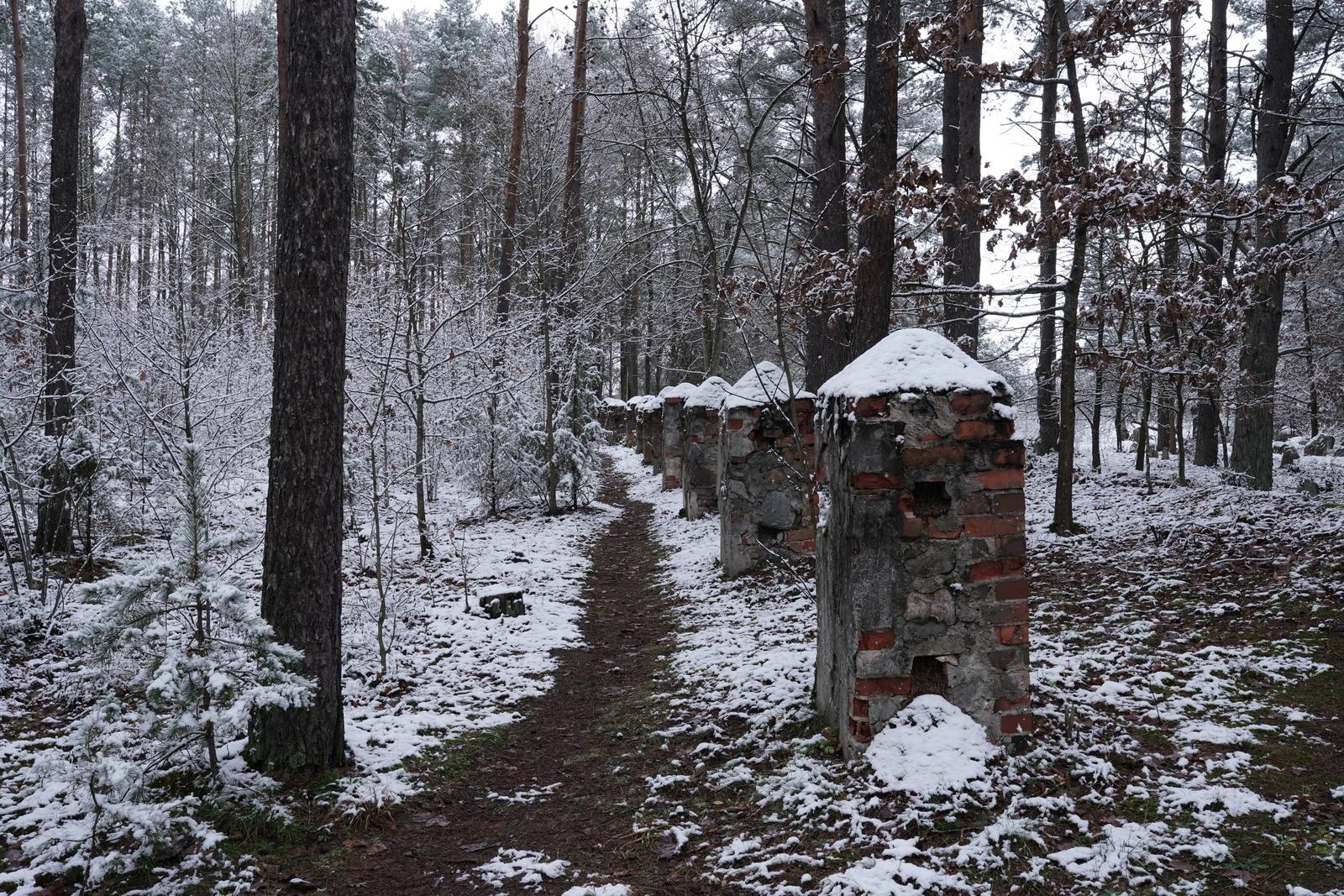 Miškas žiemą.