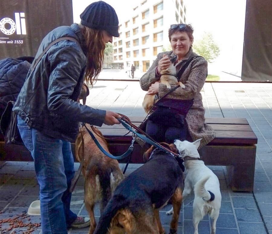 Giedra su mažu šuniuku ant rankų, o šalia mergina su trimis šunimis ant pavadėlių, kuriems rūpi Giedros šuo.