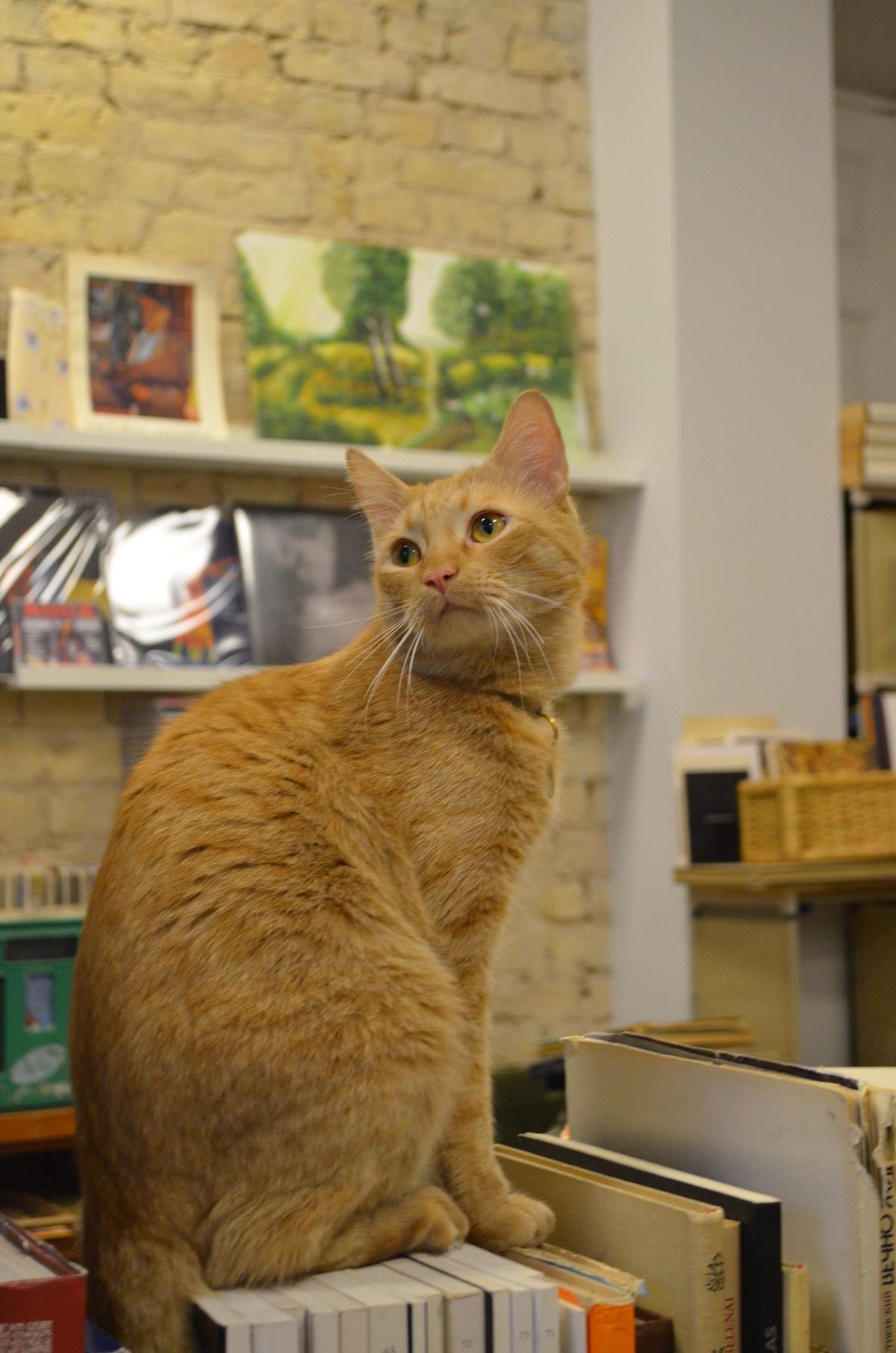 Katinas ant knygų.