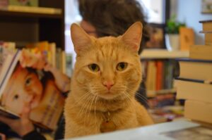 Katinas knygyne.