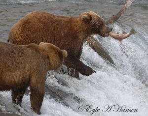 Lokiai žvejoja.