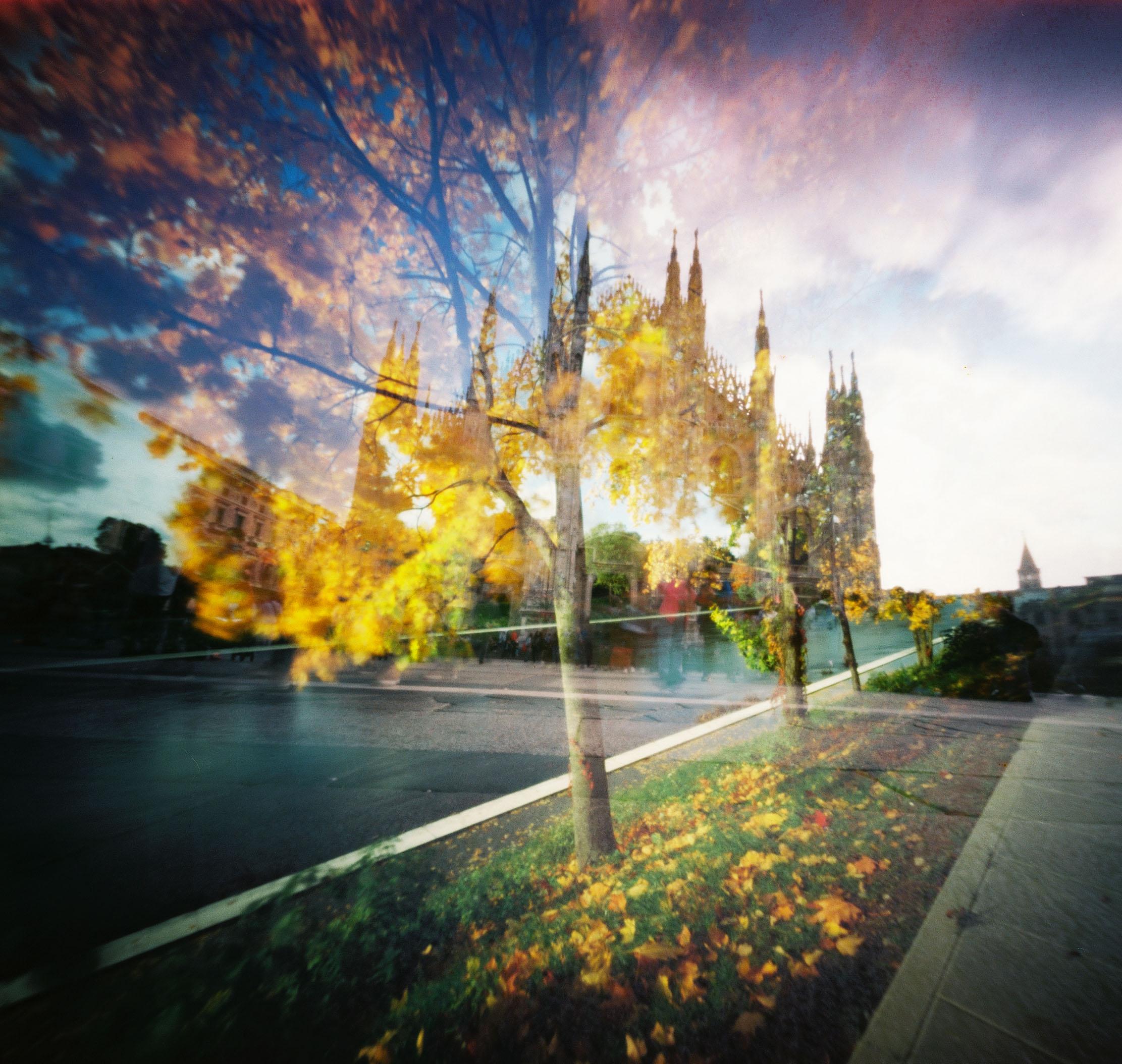 Medžiai rudenį.