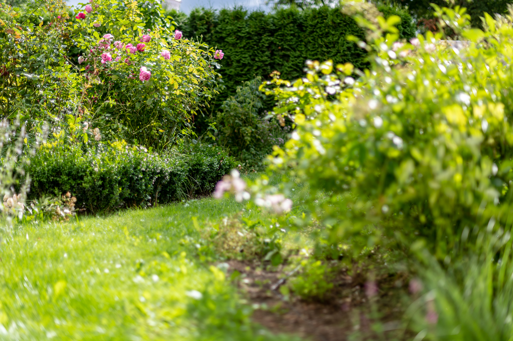 Vienuolių sodas: veja, rožynas.
