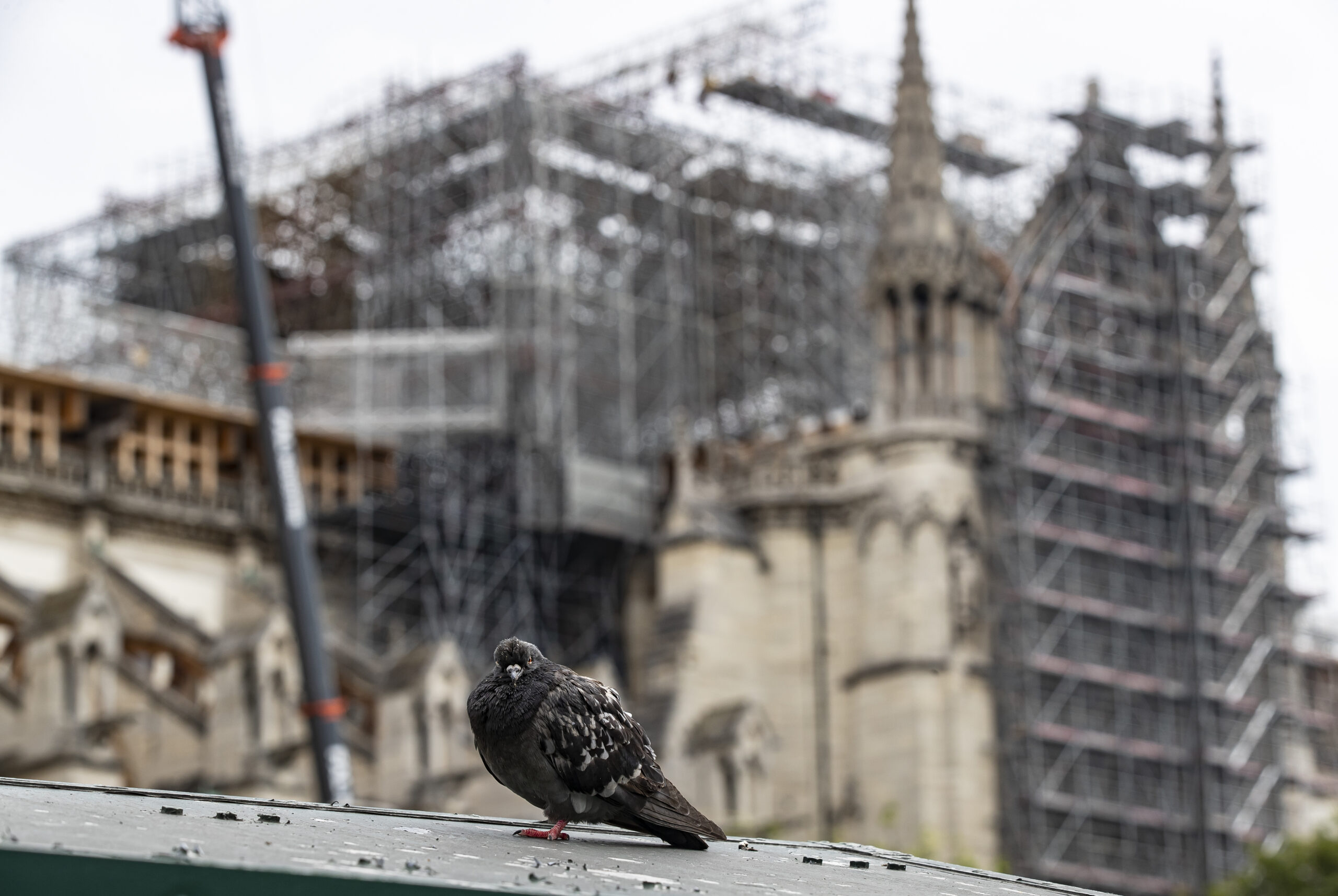 Paryžiaus Dievo Motinos katedra