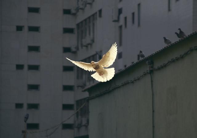Šventoji Dvasia